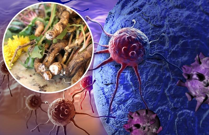 В 100 раз эффективнее химиотерапии! Трава, которая убивает раковые клетки в течение 48 часов