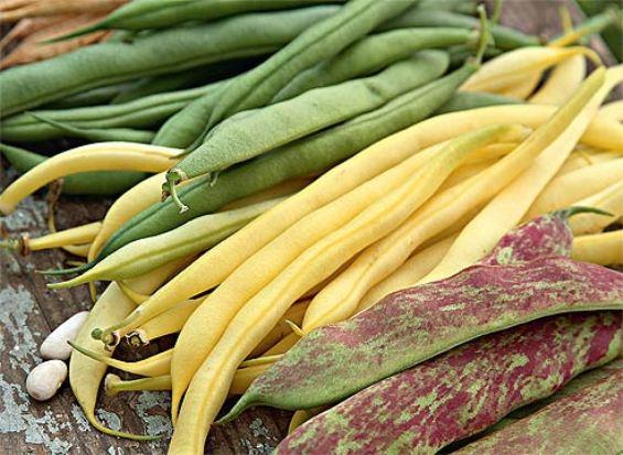 Лекарство с огорода - створки фасоли