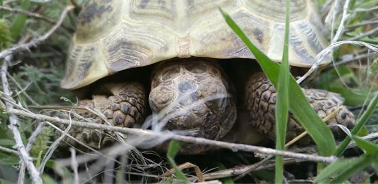 Людей переселили, чтобы защитить «русских» черепах в Китае