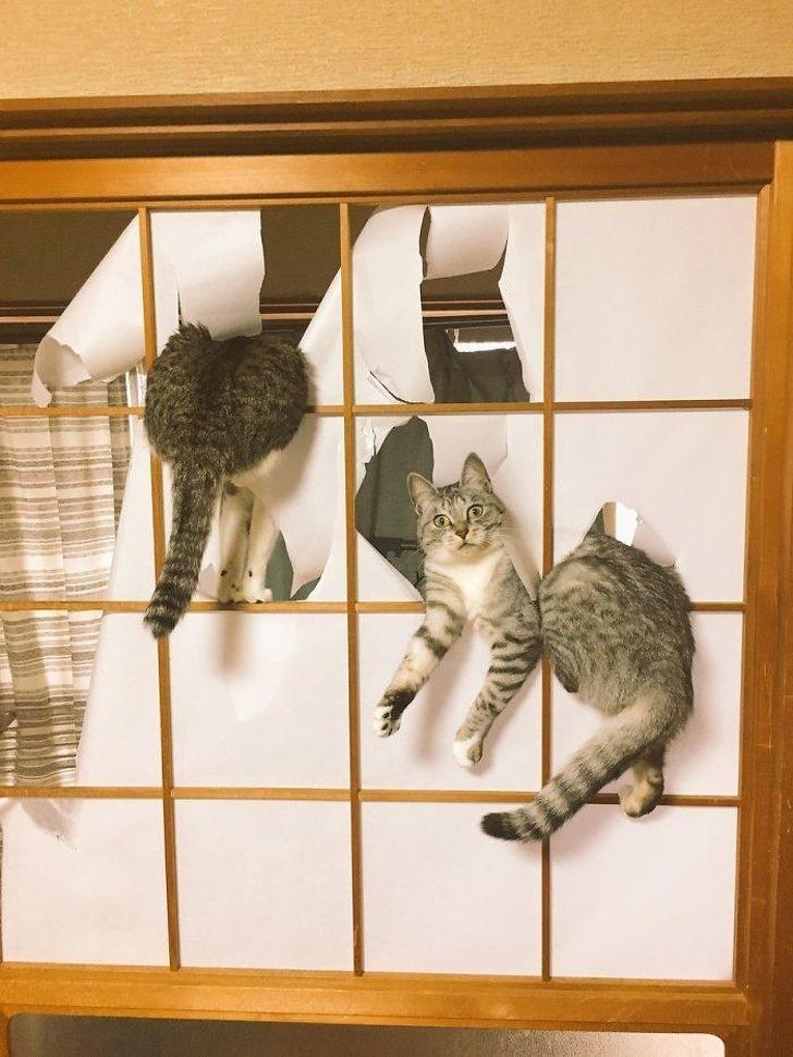 Безумные коты, которые плева…