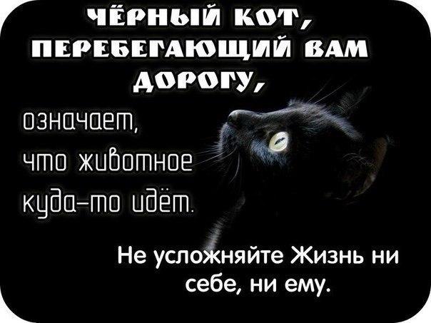 И будет вам счастье! (кошачьи приметы). Животные, которые переживут аппокалипсис!