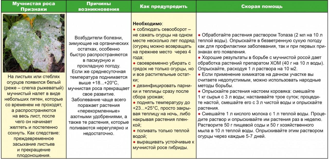 Скорая помощь огурчику - спасаем от мучнистой росы (таблица)