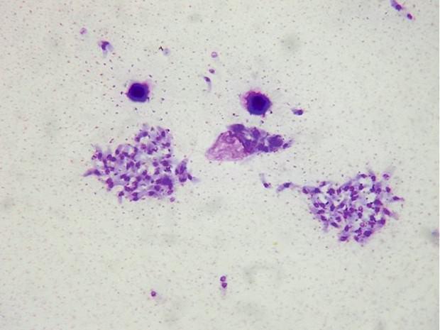 Животные паразиты (3)