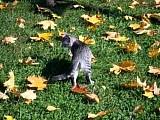 КОТЯТА в кленовых листьях