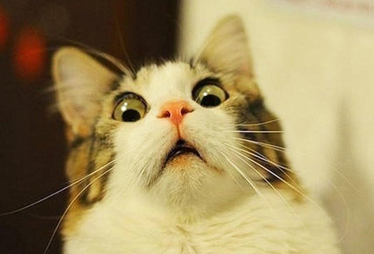 Приколы про кошек: да что вы знаете о талантах своего питомца? 10 причин, почему жить без кота скучно