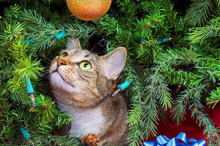Растения, опасные для кошек и собак