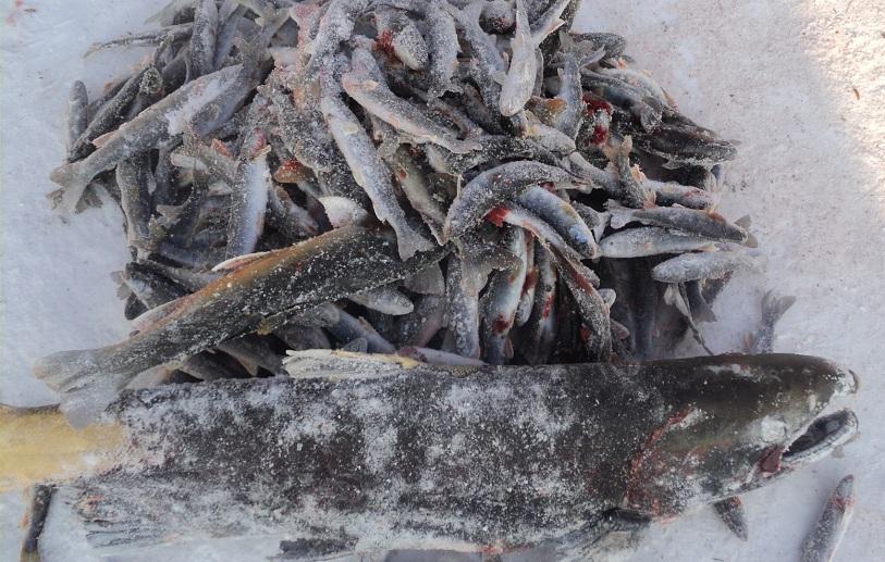 Мои блюда из рыбы. Похвастушки.