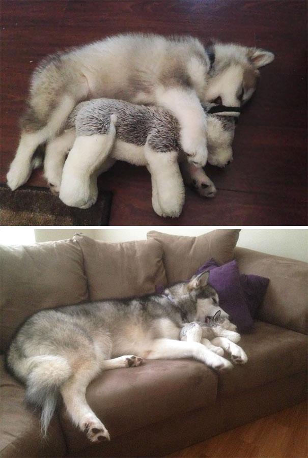 У домашних животных тоже есть свои любимые игрушки!