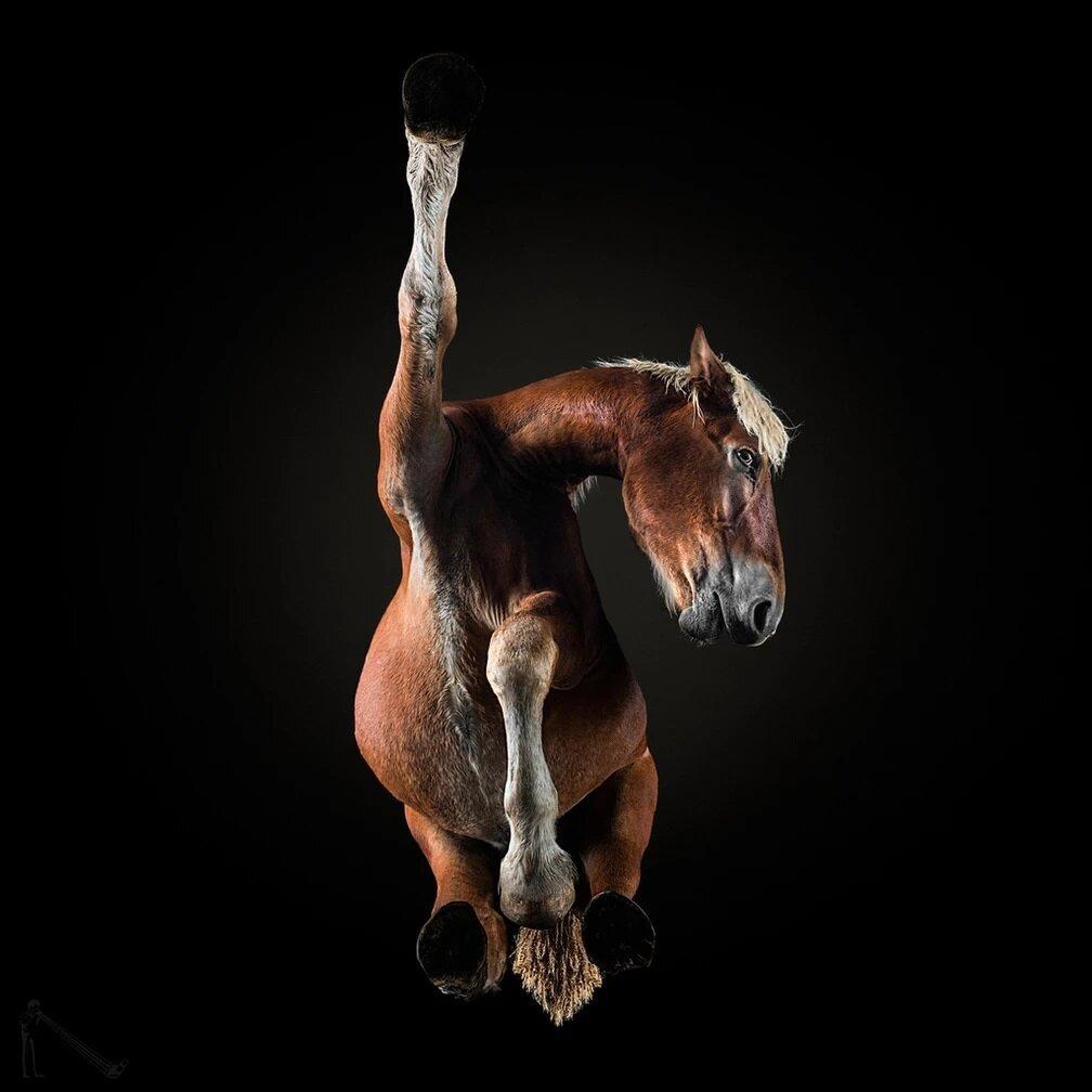 Под лошадью — необычная и забавная фотосессия