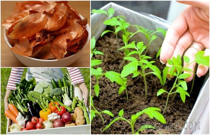 12 советов, которые помогут грамотно организовать грядки и существенно повысить урожайность