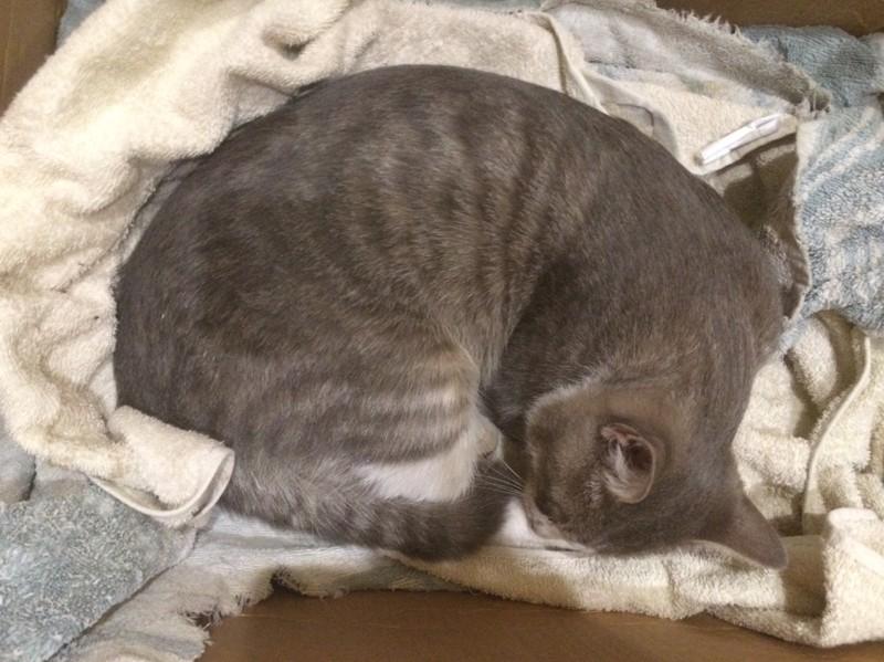 """Операция """"Блесна"""" или как мы кота спасали животные, коты"""