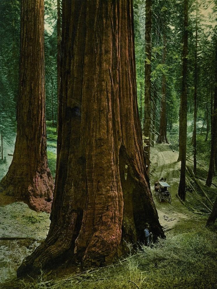 Samye-pervye-tsvetnye-fotografii-Ameriki-14