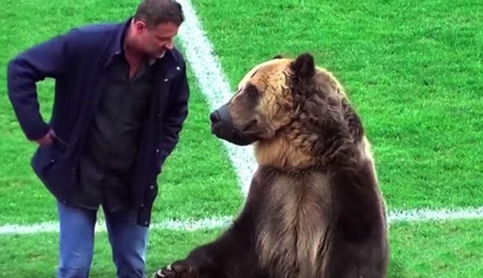 Появление медведя во время ф…