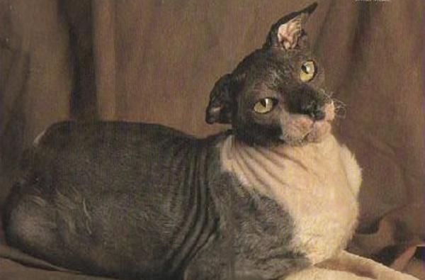 Домашние животные-долгожители, которые поставили ученых в тупик