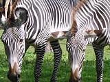 Московский зоопарк. Жирафы, зебры, страус. Часть1