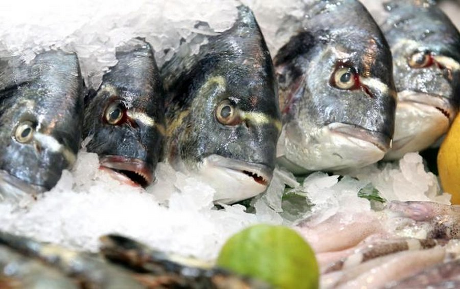 Какую рыбу нам продают