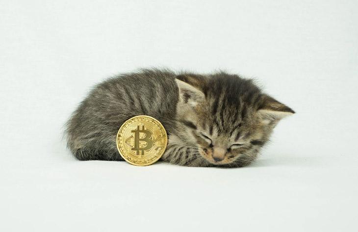 Биткойн-монеты