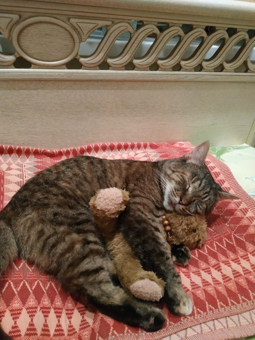Кошка быстро запрыгнула в сумку к посетительнице приюта и отказалась вылезать