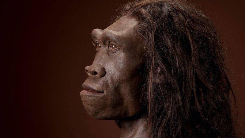 Homo erectus жили на Земле около миллиона лет, в 10 раз больше, чем мы, но так и не создали ни культуры, ни сложных орудий труда древние люди, история, факты, человечество