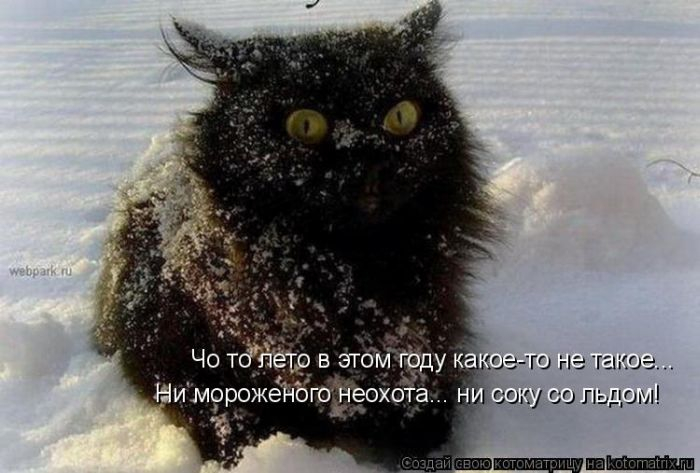 Коты, кошки вас ждут!