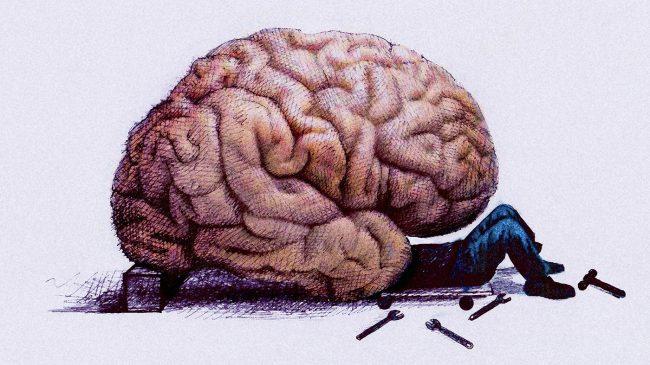 22 гена, связанные с интеллектом