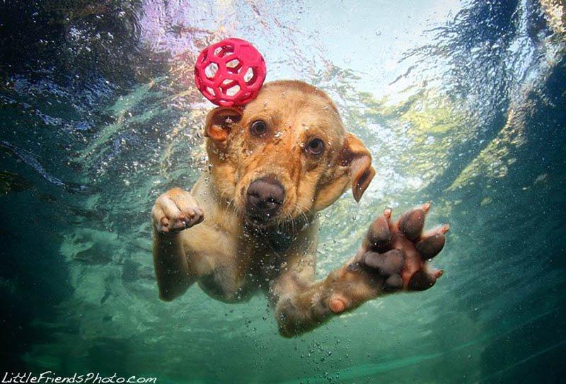 Собаки – в водуныряки