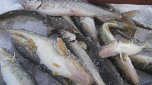 Беломорск приглашает на первый Фестиваль зимней рыбной ловли