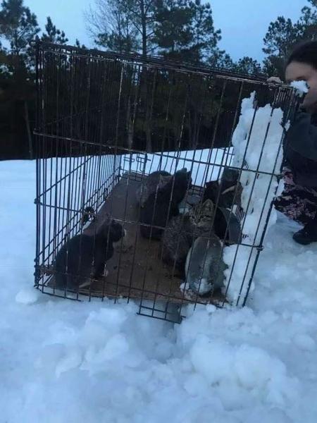 Неравнодушные люди спасли котят, которых бросили на произвол судьбы в клетке в глубоком снегу