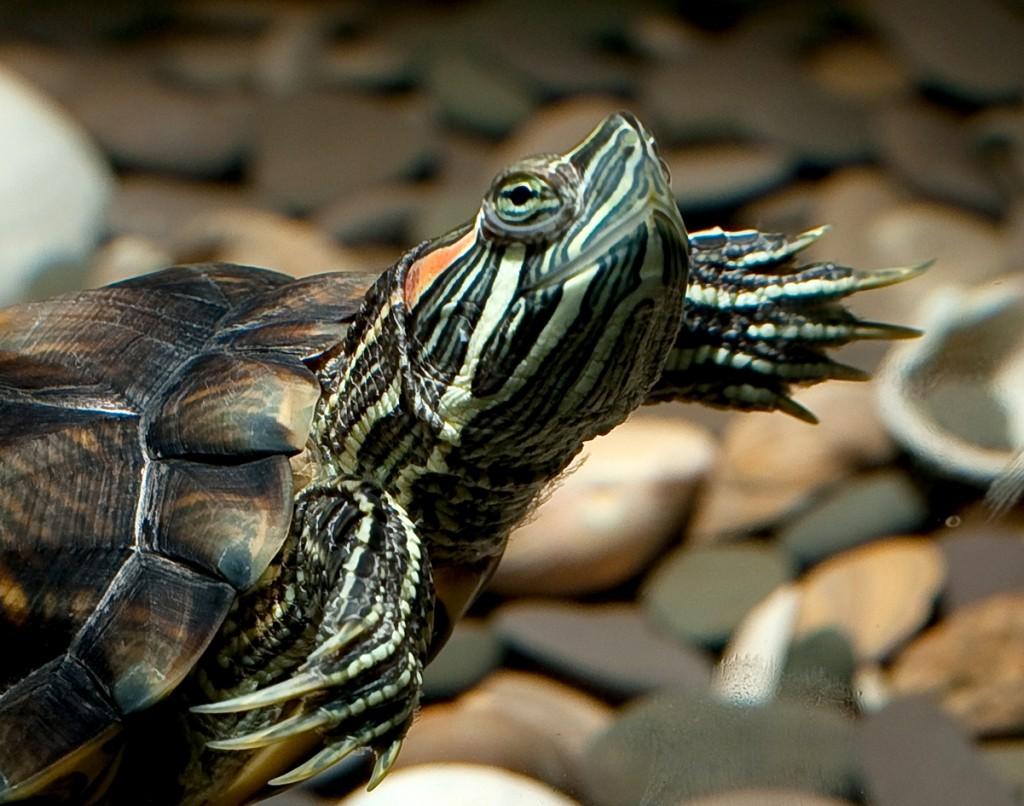 из серии черепахи на фотосессии