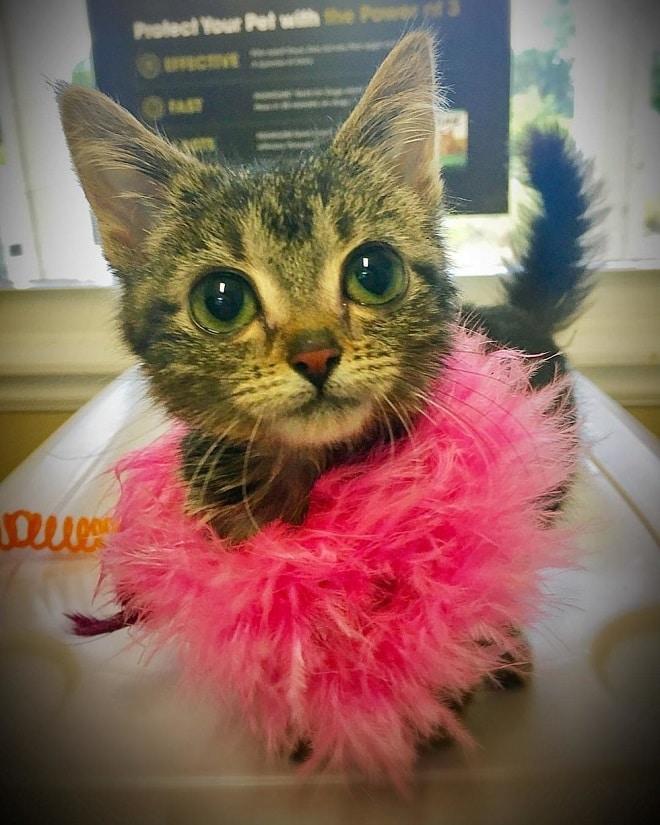 «Котенок навсегда»: малышка …