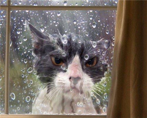 Кошки, которые достойны Оска…