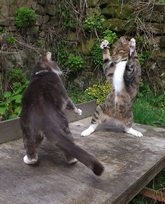 """Человек заснял """"танцующих"""" котов"""