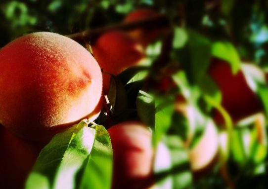 Притча и персик