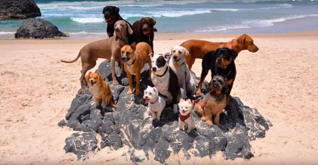 Мужчина привёз 12 собак и одного кота на пляж. То, что они сделают, поднимет вам настроение на целый день!