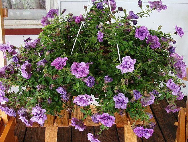 кашпо для цветов петуния