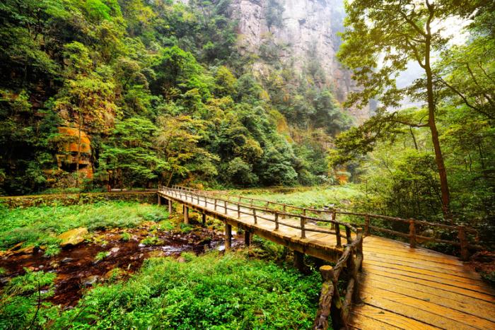 6 реальных лесов, которые выглядят словно из фэнтези