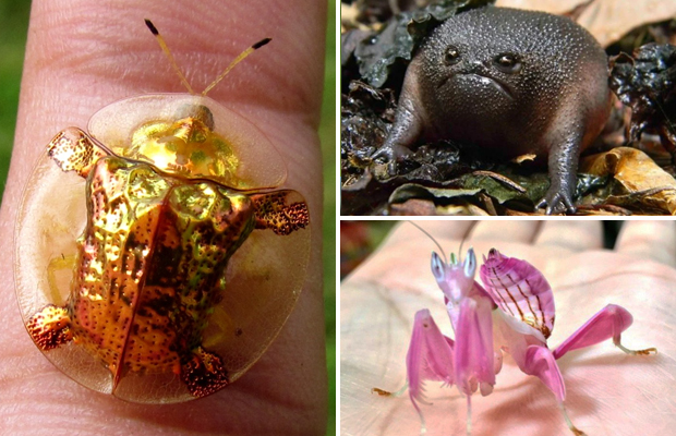 Необычные создания природы, которые приводят нас в ступор и удивление