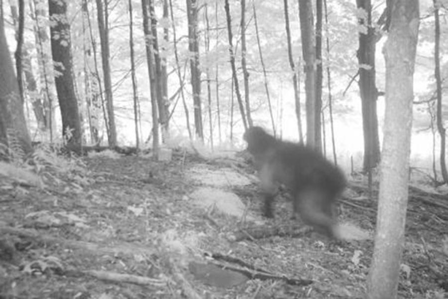 Необъяснимые фотографии из глубин леса