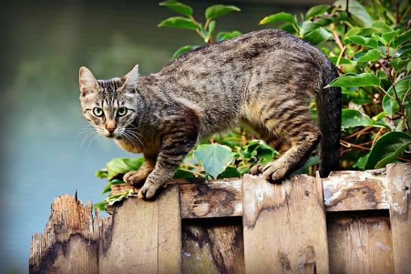 Могут ли кошачьи паразиты вы…