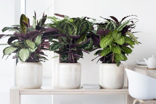 Комнатные растения с необычными рисунками на листьях