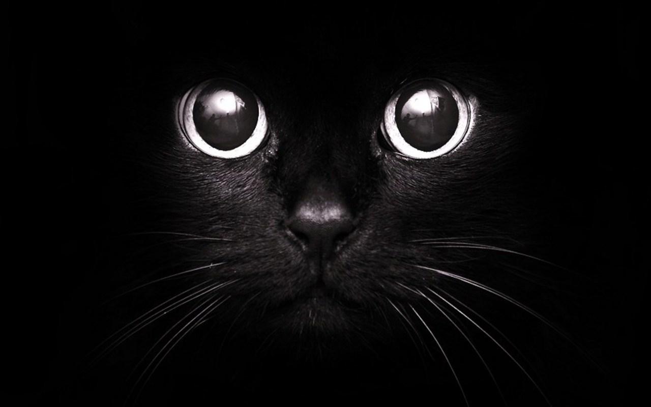 Найти чёрную кошку в тёмной комнате