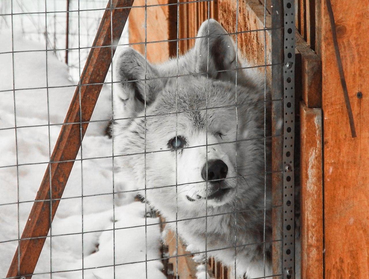 А за шкафом живет... волк!
