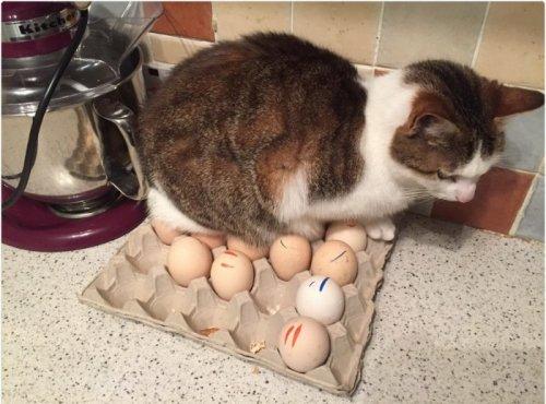 Кошки-проказницы, которые по…