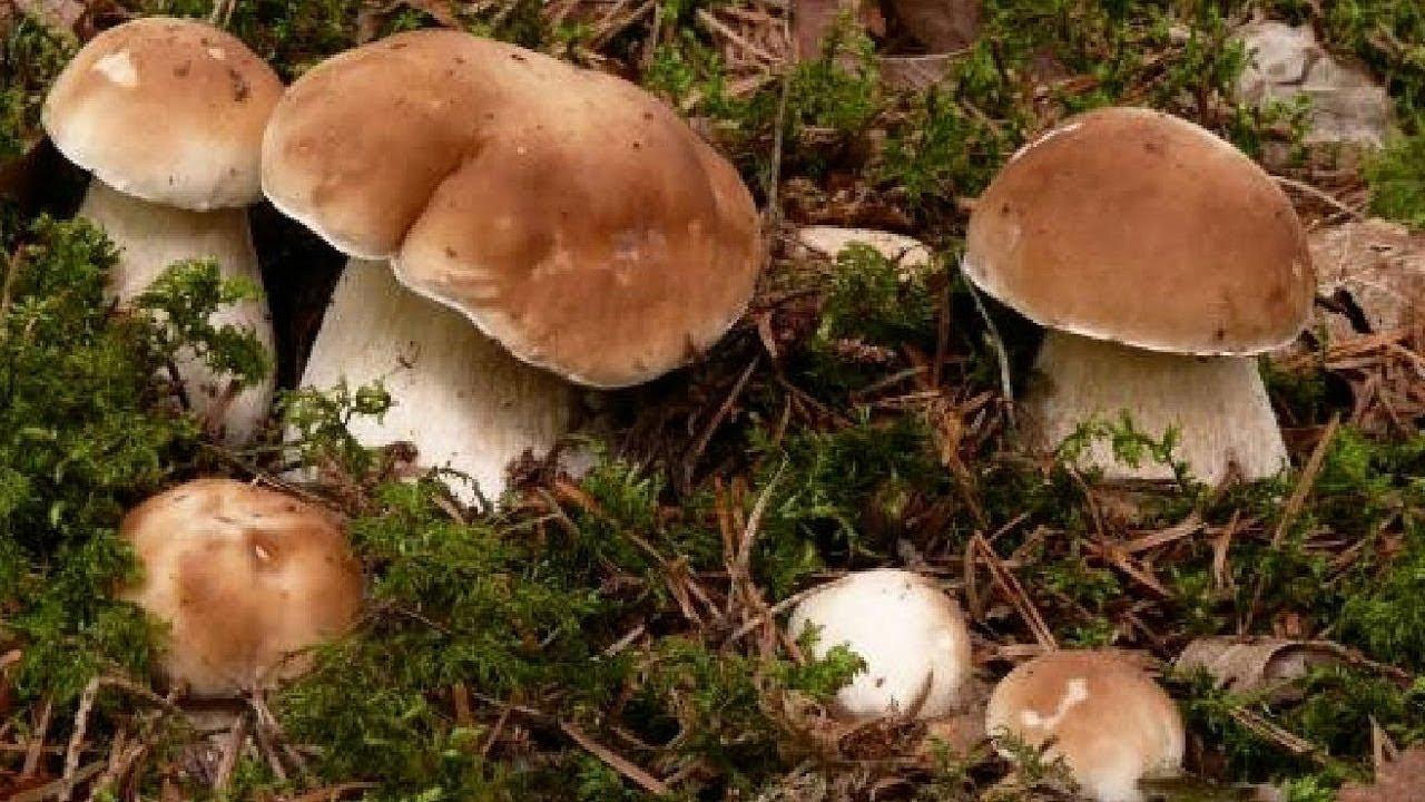 Как посадить грибы на даче: 3 способа разведения грибницы