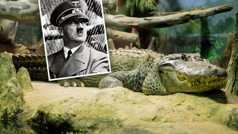 Этот крокодил мог бы съесть Гитлера