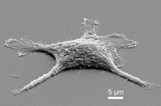 Учёные создали зомби-клетки