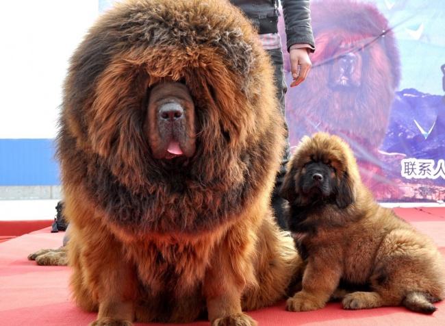 19 «самозванцев» среди животных, которые любого собьют с толку своим внешним видом