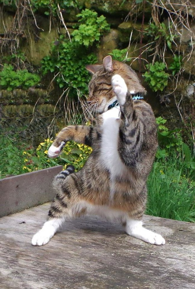 Мужчина заснял «танцующих» котов