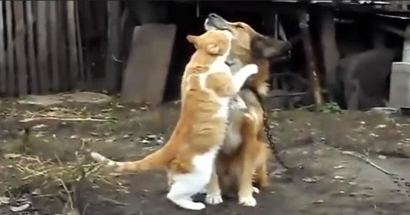 Кот обнимает и прижимает к себе собаку. Осторожно – уровень милоты зашкаливает!