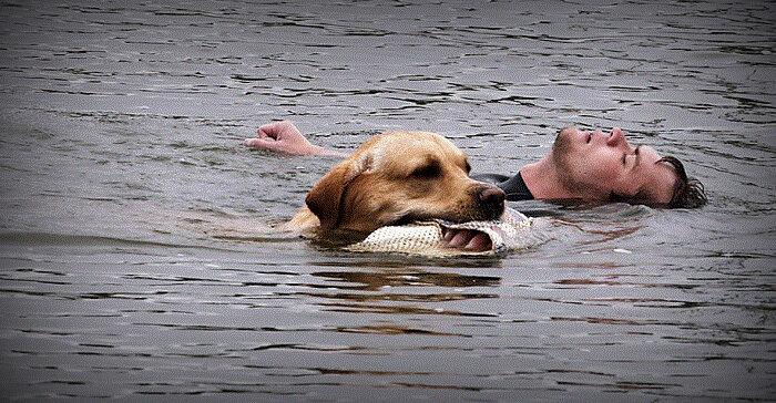 Собака спасла хозяина, который хотел его утопить в море.